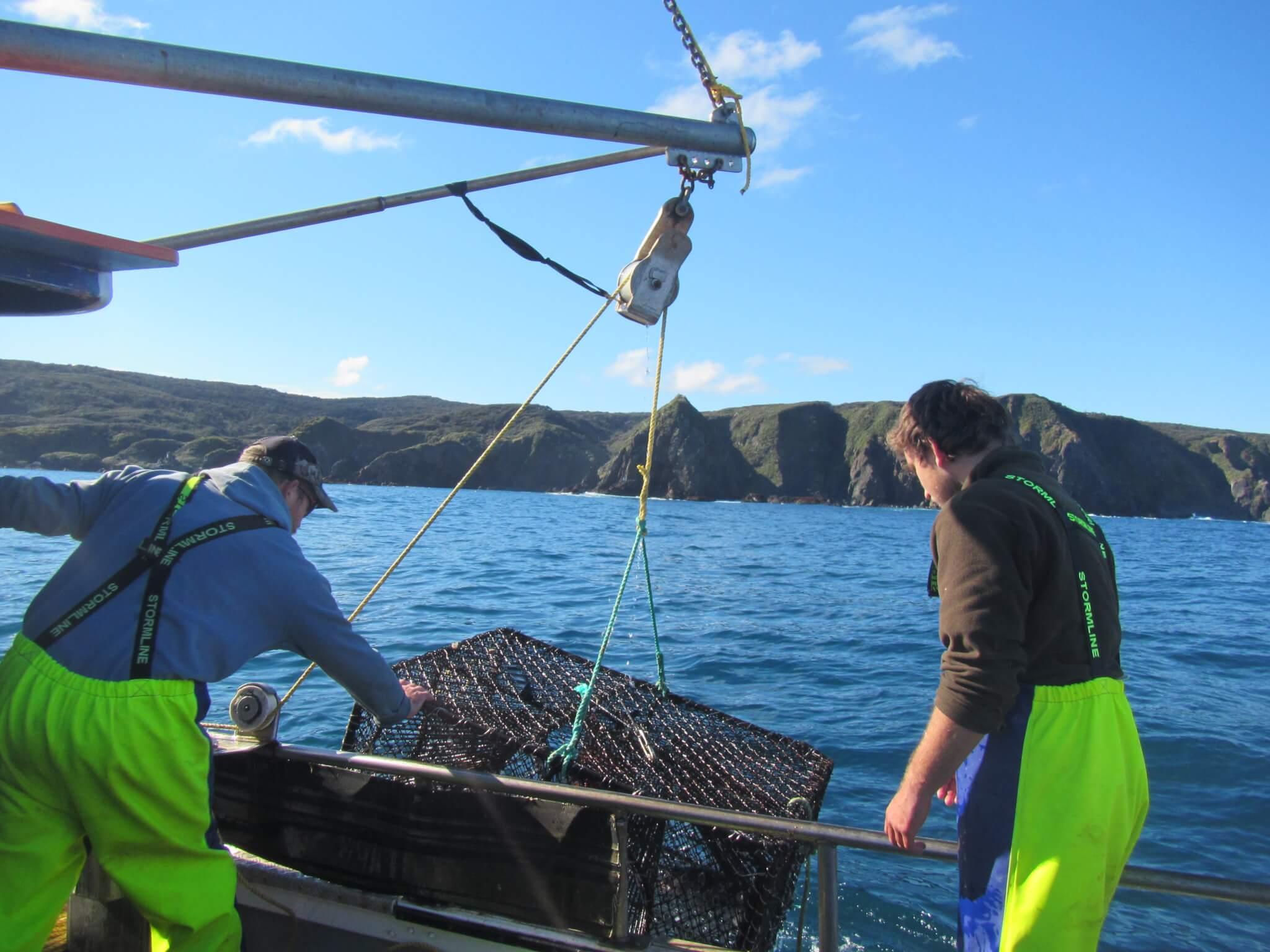 Blue cod potting survey - NIWA 2017