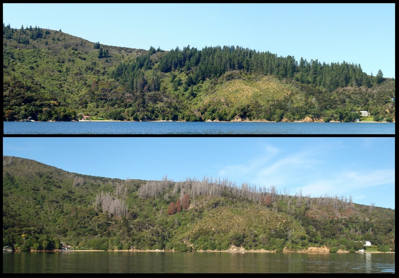 Before and after treatment in Blackwood Bay, Queen Charlotte Sound.